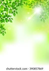 Fresh green leaf tree background