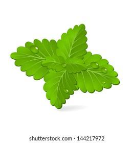 Fresh green mint, vector