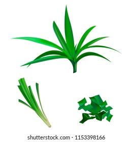 Fresh Green Pandan leaves