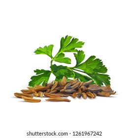 Fresh green parsley and tasty caraway. Symbols of spice. Elements for design. Vector illustration. Spices ingredients in triangulation technique. Parsley and caraway low poly.