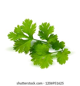 Fresh green plant, nutritious, tasty green parsley. Vector illustration. Vegetables ingredients in triangulation technique. Parsley low poly.