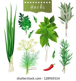 Fresh herbal bunches over white background. EPS 10