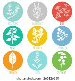 Fresh herbs and spices icon set. Vector illustration.