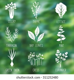 Fresh herbs and spices icon set on the nature blurry background. Celery, Thyme, Lettuce, Tarragon, Bay leaves, Mint, Green onion, Cress, Coriander. Vector illustration.