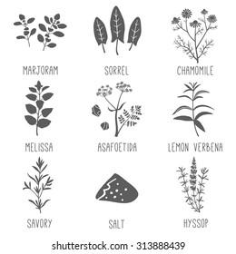 Fresh herbs and spices icon set. Marjoram, Sorrel, Chamomile, Melissa, Asafoetida, Lemon verbena, Savory, Salt, Hyssop. Vector illustration.