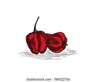 Fresh Hot Chili - Red Pepper Hand Drawing Logo Symbol Vector