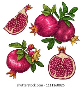 Fresh and juicy pomegranate. hand drawn colorful illustration isolated on white background. Doodle healthy food illustrations