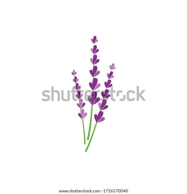Fresh Lavender flower logo vector flat design