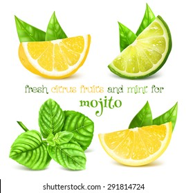 Fresh lemon, lime and and mint for drink mojito. Vector illustration.