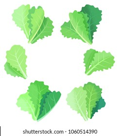Fresh lettuce leaves collection isolated on white background. Hand-drawn vector illustration