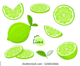 Fresh lime fruits, collection of illustrations