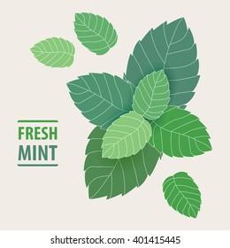 Fresh Mint leaves.