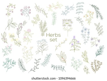 Fresh modern medicinal herbs and flowers. Hand drawn illustration for herbal tea, natural cosmetics, health care products, aromatherapy, homeopathy. Summer art.