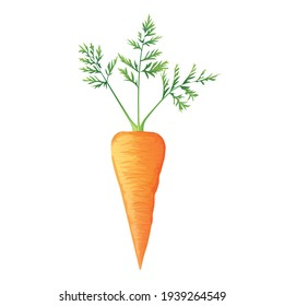 Fresh orange carrot with green leaves, health food, vector icon