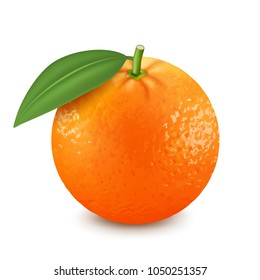 Fresh orange fruit with green leaf. 3d realistic vector image
