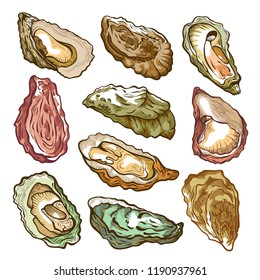 Fresh oyster hand drawn set on white. Large flat shellfish, sea creature, marine bivalve mollusks eaten raw as a delicacy. Vector illustration isolated from background
