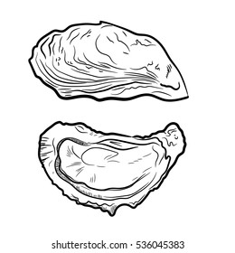 Fresh oysters vector set. Black and white graphic design. Sea food. Vector illustration. Hand drew oyster isolated on white background