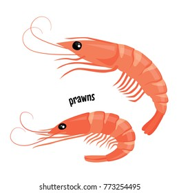 Fresh prawns. Vector illustration isolated on white