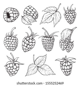 Fresh raspberries hand drawn vector illustrations set. Summer berries with leaves decorative design elements collection. Organic fruits detailed drawings isolated on white. Healthy eating