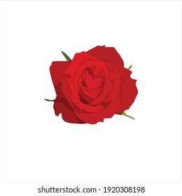 fresh red rose flower blooming vector digital design graphic 2d hd illustration
