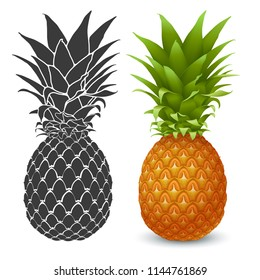Fresh ripe Pineapple. Realistic and graphic vector illustration. Isolated on white background.