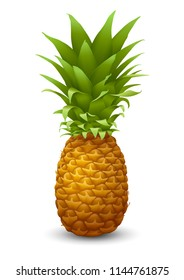 Fresh ripe Pineapple. Realistic vector illustration. Isolated on white background.