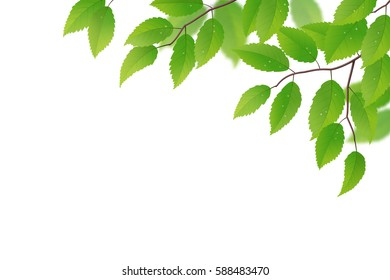 Fresh spring branch with green leaves on white