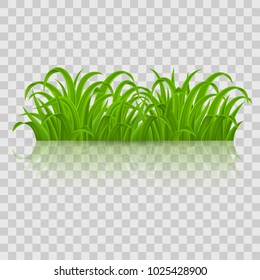 Fresh Spring Green Grass Elements for Nature Design. Illustration on Transparent Background for Design