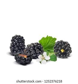 Fresh, sweet and tasty blackberry. Blooms of blackberries. Symbols of berries. Elements for label design. Vector illustration. Berries ingredients in triangulation technique. Blackberry low poly.