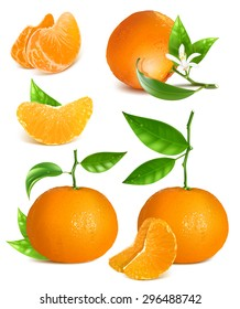 Fresh tangerines with green leaves. vector illustration.