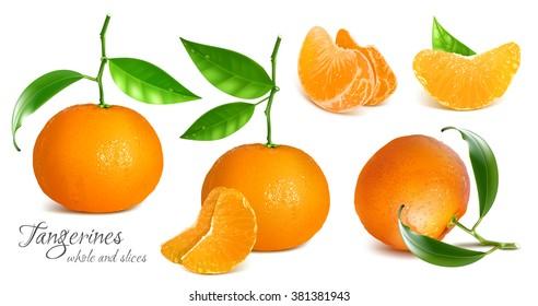 Fresh tangerines with green leaves. Vector illustration. Fully editable handmade mesh.