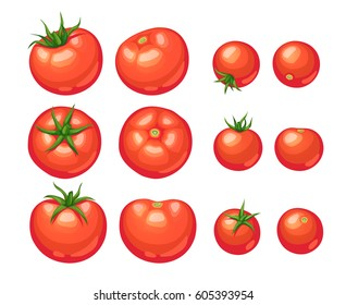Fresh tomato illustration isolated on white background. Ripe tomatoes collection.