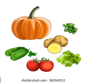 Fresh vegetables. New harvest. Pumpkin, potatoes, tomatoes, cucumbers, lettuce, parsley. Vitamins for healthy diet. Vector.