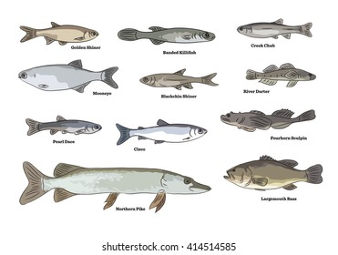 Freshwater fish illustrations. Silver Chub, Brown Trout, White Crappie, Black Crappie, River Darter, Brown Bullhead, Gold Shiner, Creek Chub fishes.
