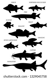 Freshwater fish of North America with common names. Vector drawn silhouettes images set.