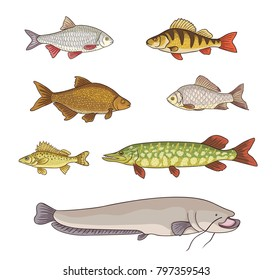 Freshwater fish - set of different fishes. Vector illustration. EPS8