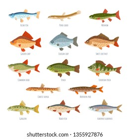 Freshwater fish set isolated on white background. Vector collection of different types of fish, such as European perch, alburnus, Bleak fish, Golden carp, Tench, Northern pike, Gudgeon, loach, Minnow