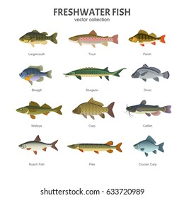 Freshwater fish set. Vector illustration of different types of fish, such as Largemouth Bass