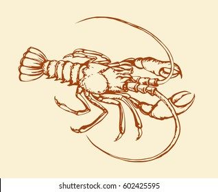 Freshwater isolated on white background. Freehand outline orange ink hand drawn picture icon sketchy in scribble retro style pen on paper