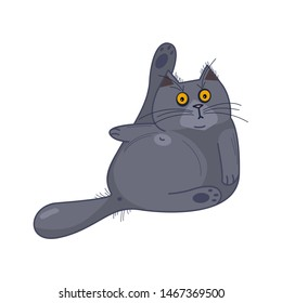 Frightened British fat cat with wide open eyes washes himself on white isolated background, cartoon style-vector