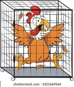 A frightened chicken inside a Cage trap