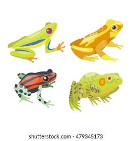 Frog cartoon tropical animal and green frog cartoon nature icons