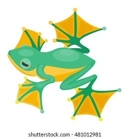 Frog cartoon tropical animal and green frog cartoon nature icons