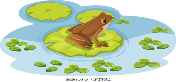 A frog on lotus leaf in the water illustration