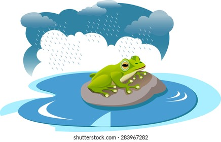 A frog on rock in a pond during rain.