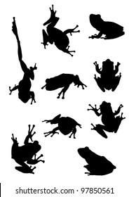 Frog, Tree frog on papyrus tree