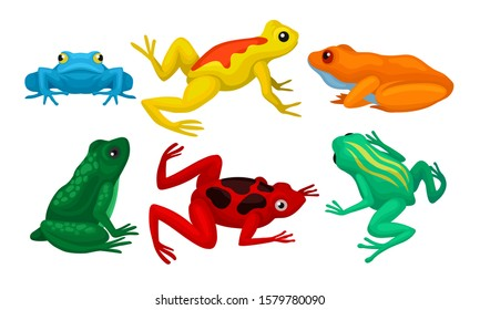 Frogs Collection, Amphibian Animals of Different Colors Vector Illustration