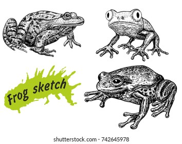 Frogs hand drawn sketch isolated on white background and green blob with drops. Reptiles and amphibian sketch elements vector illustration.