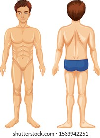 Front and back of human male illustration