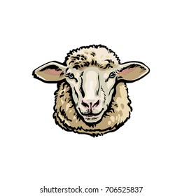 Front view sketch style portrait of domestic farm sheep, vector illustration on white background. Realistic hand drawing of ewe head, sheep breeding concept, milk meat and wool production symbol